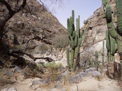 Cacti on the walk - climb - caving expedition!