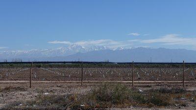 Mountains and vineyards Mendoza