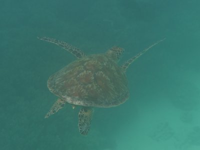 Elation after seeing a turtle