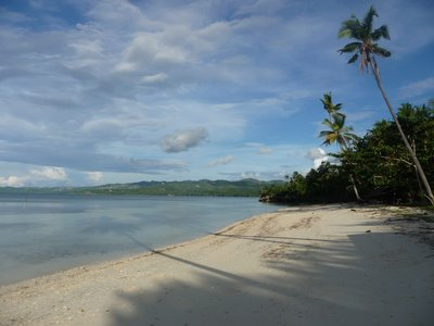Siquijor palm trees and beach