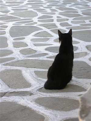 Lonely cat in Mykonos