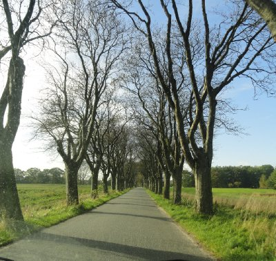 Avenue of trees which have already lost their leaves