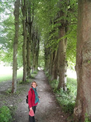An arcade of beautiful lime trees