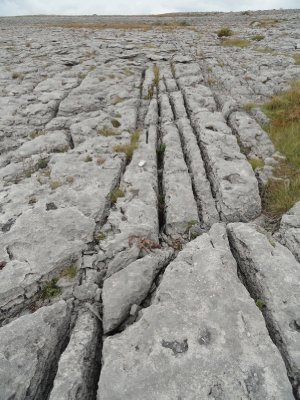 Grikes and clints run along the limestone pavement