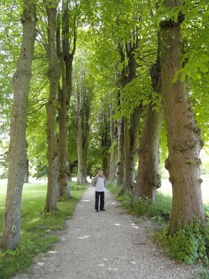Arcade of lime trees lead us through the fields