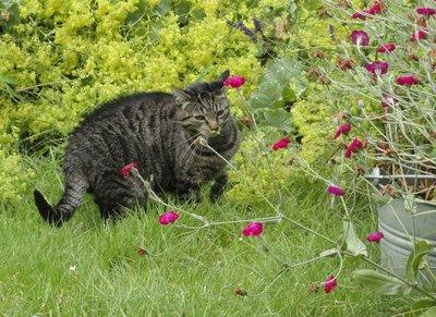Cosine exploring her back garden