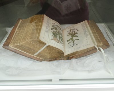 Almost 400 years old, this beautifully illustrated book describes major medicinal plants of the 1600's when opium became a common remedy.  Even back then one could only buy opium at the apothecary's shop with a proper prescription