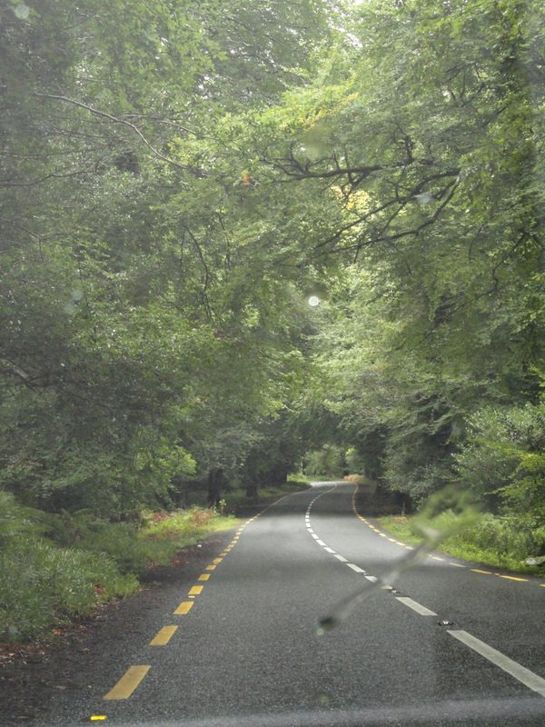 Lovely tree covered roads.