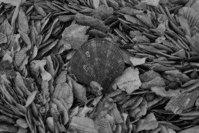 'Shell Beach' Stykkisholmur