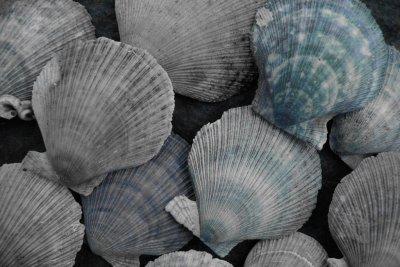 shells, 'Shell Beach' Stykkisholmur