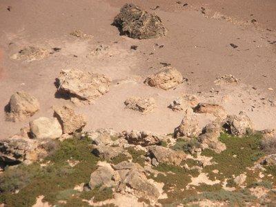 Sealions at play at Point Labatt