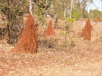 Big Termite Mounds all the way to the Top End