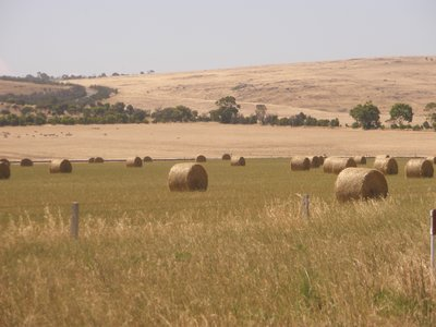Wheat fields harvested on the Eyre