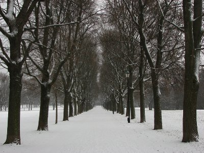 Snowy path