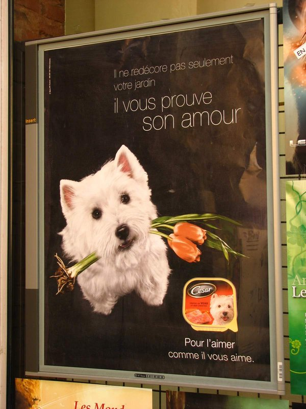 Cute advert