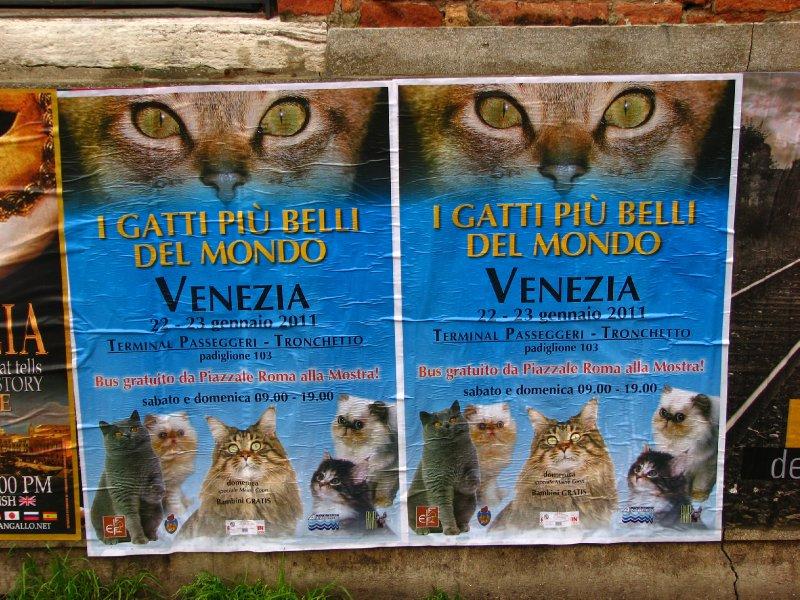 Cat exhibition poster