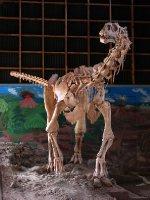 Malawisaurus