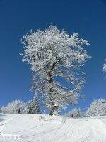 skiing in Bulgaria