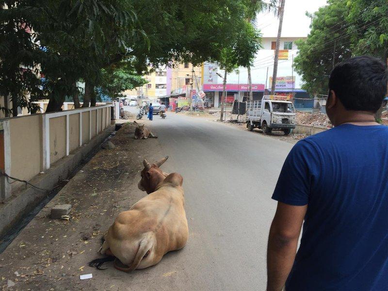 large_20160827_I..Chennai_005.jpg
