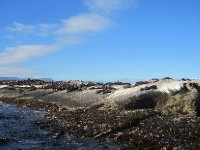 Seal Island!