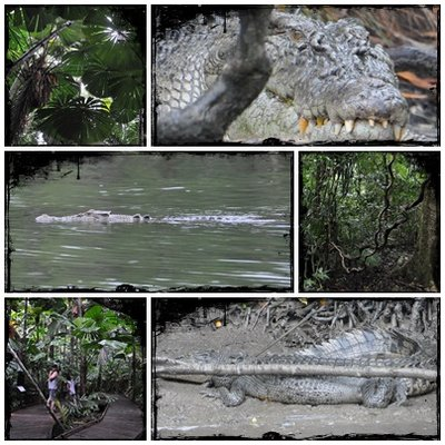 Our Croc Cruise