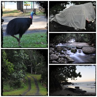 (Cassowary, Brooks Track, Josephine Falls,view from our van)