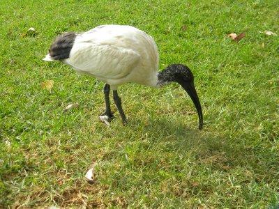 Strange Bird in Park