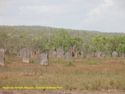 Magnetic Termite Mounds, Litchfield National Park