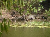 ac_Lakefie.._Croc_3.jpg