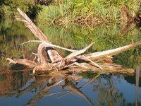 g_Canoeing_l.jpg