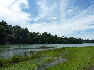 MacRitchie Reservoir 11km round trip walk