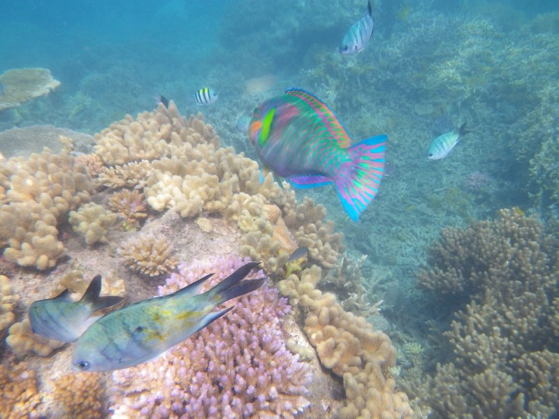 Snorkeling in Luncheon Bay