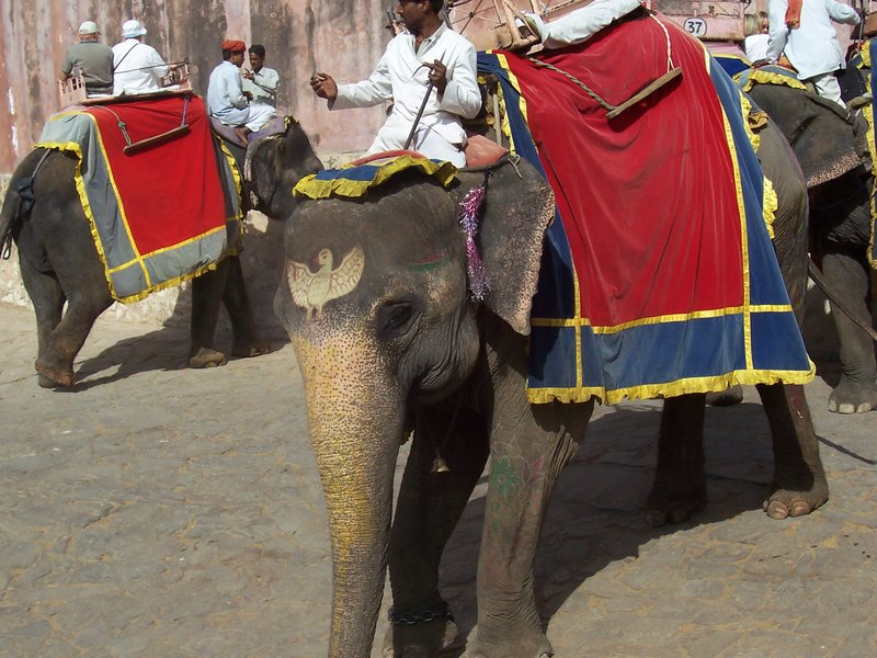 Elephant ride! Yay!