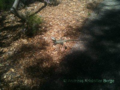 a_lizard.jpg
