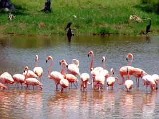 El cuyo, Yucatan, México. 2004