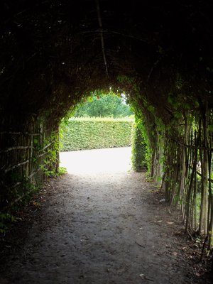 Passage of Ivy