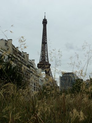 Eiffel Tower from the Gardens at Musee Quai Branly