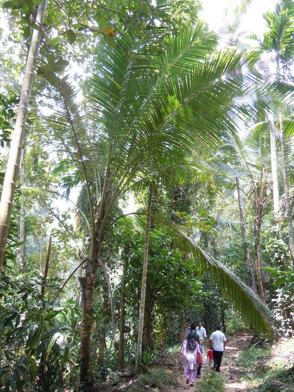 large_spectacular_palms.jpg