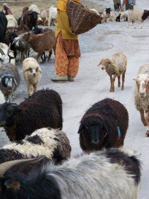 India 2011 882