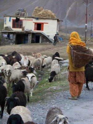 India 2011 934