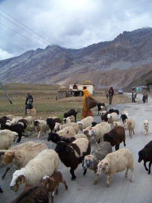India 2011 971