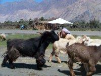 India_2011_267.jpg