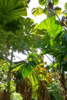 Tropical_Q..-Nov_12_258.jpg