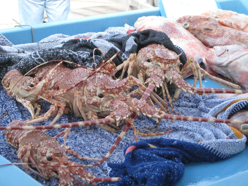 Marseille Fish Market - Shellfish