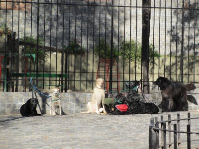 Friendly Dogs in Buenos Aires