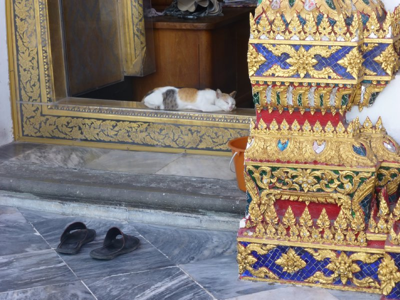 Lazy Cat at Wat Pho Temple
