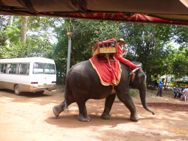 Elephant at Angkor