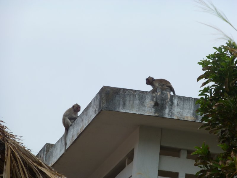More Monkeys