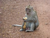 Monkey at Angkor Park