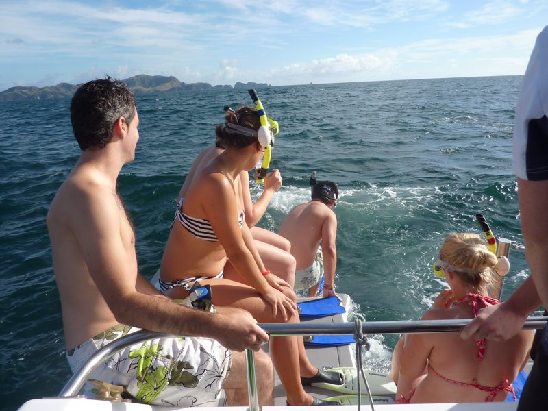 Swimming with Dolphins in Bay of Islands!